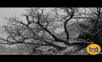 شجرة وثلج 12/12/2010