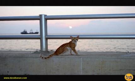 قطة- كورنيش صيدا